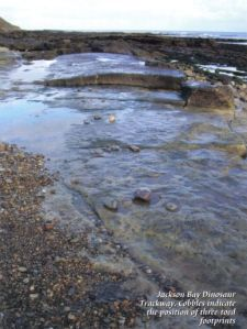 Photo of Jackson Bay Dinosaur Track from the Cleveland Circles book