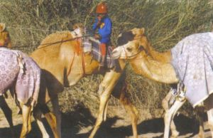 Camel jockey photo from the Wilberforce Way book