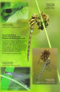 Dragonflies from the Wilberforce Way book