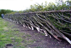 A layered hedge