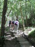 woodland trod