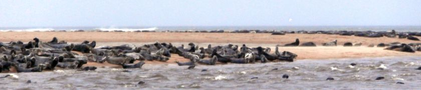 Seals at Newburgh